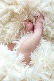 De voeten van de baby `s Royalty-vrije Stock Fotografie