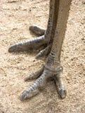 De voeten van de emoe Stock Afbeelding