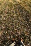 De voeten van de landbouwer Royalty-vrije Stock Foto