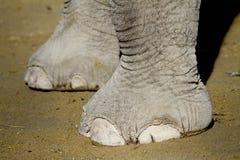 De voeten van de olifant stock foto's