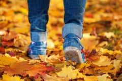 De voeten van de vrouw op de gele herfst doorbladert achtergrond Stock Foto's