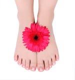 De voeten van Manicured en rode gerberbloem stock foto's