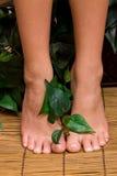 De voeten van Pedicured stock afbeelding