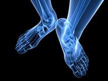 De voetillustratie van de röntgenstraal Stock Afbeelding