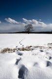 De Voetstappen van de Boom van de winter Stock Afbeelding