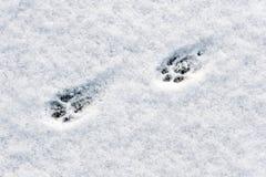 De voetstappen van de kat stock afbeelding