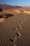 De voetstappen van het zand Stock Fotografie