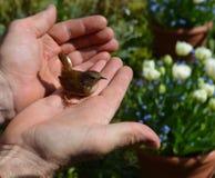 De vogel in de hand is twee in de struik waard Stock Fotografie