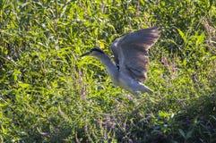 De vogel in de vijver Royalty-vrije Stock Foto's