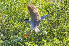 De vogel in de vijver Stock Afbeelding