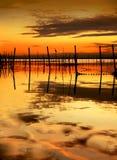 De vogel in de zonsondergang stock fotografie