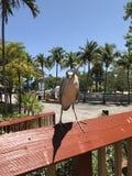 De vogel en de hagedis bekijken elkaar stock foto