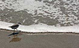 De vogel gaat de branding in Melbourne, Florida, de V.S. in Stock Afbeelding