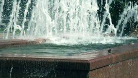 De vogel kijkt rond op de tegel door de fontein stock videobeelden