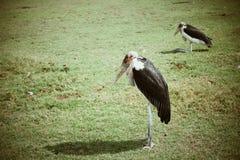 De vogel kijkt zo eenzaam op het gebied Royalty-vrije Stock Fotografie