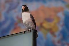 De vogel is klaar om, tegen de achtergrond van een wereldkaart te reizen, zittend op een nootbook stock fotografie