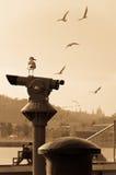 De vogel let op over de vliegende  Stock Foto's