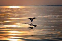 De vogel neemt van bij Zonsondergang Stock Foto's
