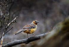 De vogel op de tak wordt neergestreken die Royalty-vrije Stock Afbeeldingen