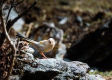 De vogel op een rots wordt neergestreken die Stock Afbeeldingen