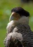 De vogel op een witte vogel toont Royalty-vrije Stock Afbeeldingen