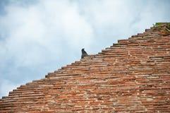 De vogel op geruïneerde oude tempel Stock Afbeelding