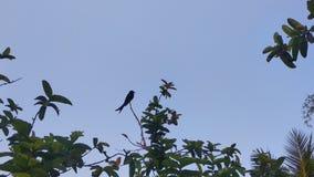 De vogel op de tak in de dagtijd hoog boven de grond stock foto