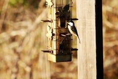 De vogel purched in de herfst op een vogelvoeder Stock Foto's