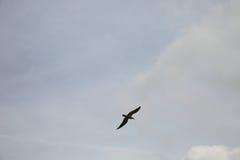 De vogel stijgt in de hemel Stock Afbeeldingen