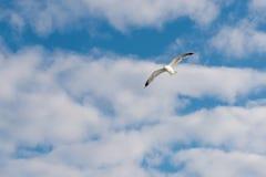 De vogel stijgt in de hemel royalty-vrije stock fotografie