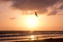 De vogel stijgt tijdens Gouden Zonsondergang over Oceaan royalty-vrije stock foto