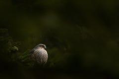 De vogel van bidt Royalty-vrije Stock Fotografie