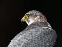 De vogel van bidt Stock Foto's