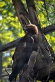 De vogel van bidt Royalty-vrije Stock Afbeelding