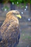 De vogel van bidt Stock Afbeeldingen