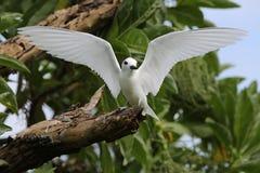 De Vogel van de feestern Stock Afbeelding