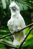 De vogel van de kaketoe Stock Foto's