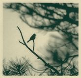 De Vogel van de kalligrafie vector illustratie