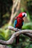 De vogel van de papegaai Stock Foto