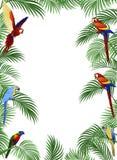 De vogel van de papegaai Stock Foto's