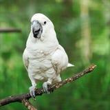 De vogel van de papegaai stock afbeelding