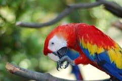 De Vogel van de schoonheid Royalty-vrije Stock Afbeelding