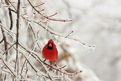 De vogel van de sneeuw Stock Fotografie