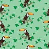 De vogel van de toekan Groene Achtergrond Royalty-vrije Stock Foto's