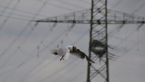 De vogel van de zeemeeuw tijdens de vlucht Stock Foto