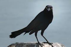 De Vogel van Halloween Stock Afbeeldingen
