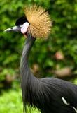 De Vogel van Kasuari Royalty-vrije Stock Foto's