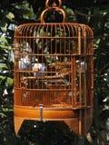 De vogel van Mynah in een kooi in Hongkong stock afbeeldingen