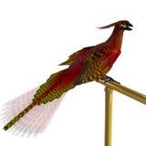De Vogel van Phoenix op Toppositie Stock Fotografie