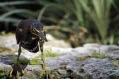 De vogel vangt insect Royalty-vrije Stock Fotografie